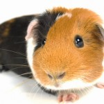 Test Prep for the Guinea Pig Class of 2017: To SAT . . . or Not to SAT?